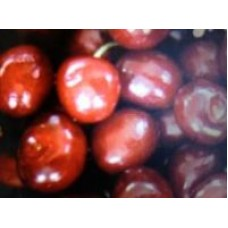Morello Cherry Fragrance x 10ml